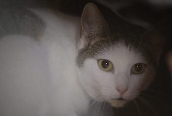 Campagne de Brand Content TV pour Ceva Santé Animale